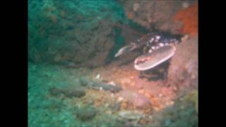 Diving The Jurassic Coast ~ A  precious underwater eco system