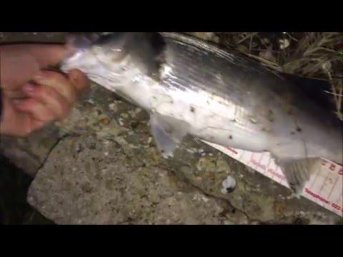 Bass Fishing In Gosport Creek