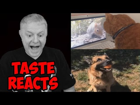 TASTE REACTS #2 | FUNNY CAT AND DOG VINES