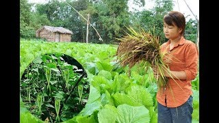 Survival Skills: How to Grow a organic vegetable garden - Part1