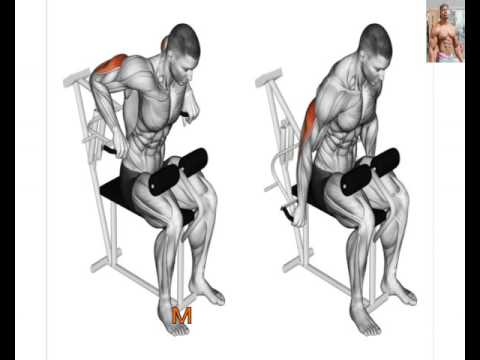 Triceps workouts Anatomy 13 Exercises That Building your Triceps ...