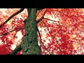 Осенний блюз   муз Натальи Первиной   ролик   Костя Батурин