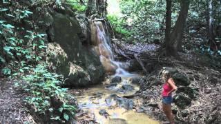 2012 01 29 Trinidad djungel