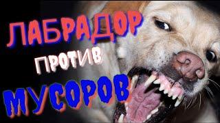 Аллергия собаки #мусора #менты #собаки