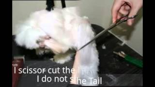 Maltese Pet Grooming - Doggy Bow