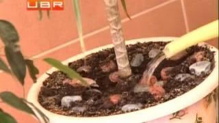 Уход за комнатными растениями в зимний период(Несколько советов по уходу за комнатными растениями зимой., 2012-01-23T20:12:42.000Z)