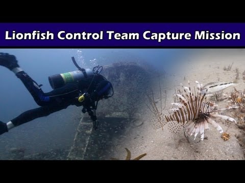 Controlling Invasive Lionfish with Appetite
