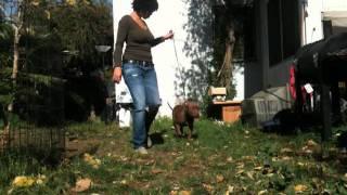 Dog Show Training 101