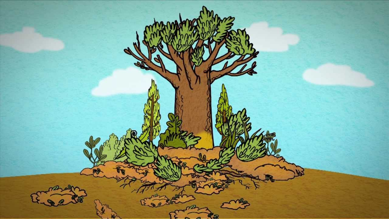 Kauri Dieback Animation Youtube Hi my name is jay a.k.a cartoon artworks! kauri dieback animation