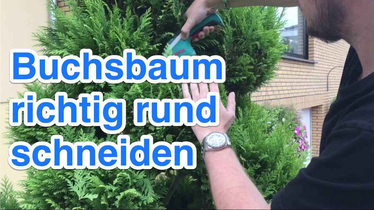 Buchsbaum Schneiden Mit Egrola Kugelschnitt-schablonen How To Trim Bushes And Trees In Round Shapes