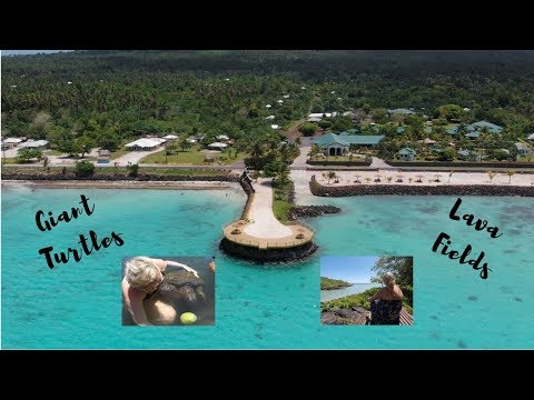 SWIMMING WITH GIANT TURTLES ][ TRAVEL VLOG ][ SAVAI'I SAMOA - LAVA FIELDS