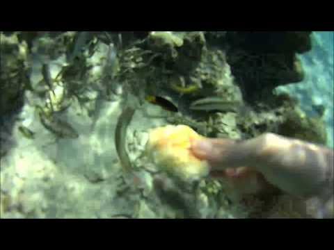 Feeding fish in Runaway Bay, Jamaica