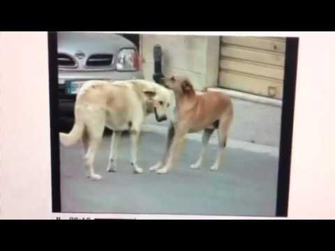DARDI PER I CANI RANDAGI: IL PARTITO ANIMALISTA EUROPEO DIFFIDA IL SINDACO DI MARSALA from YouTube · Duration:  45 seconds
