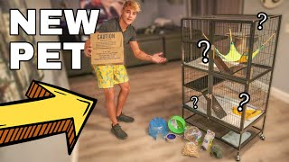 BUYING My NEW Pet Rat!! (Cage Set-up)