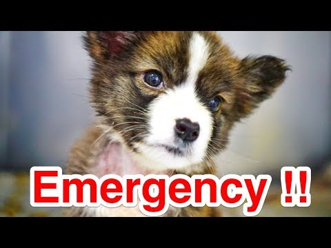 EMERGENCY! THIS IS GORDY'S ONLY CHANCE !