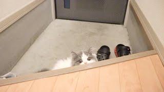 久しぶりに帰宅する飼い主を玄関で待つ子猫が可愛すぎた!