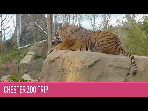 Chester Zoo 2016 in HD (Cheshire, England)