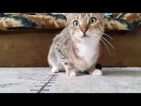แมวดูหนังผี