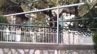 Поездка в Грецию на остров Кос.(Прошу видео строго не судите это мой первый опот. Спасибо за просмотр., 2015-09-19T16:14:13.000Z)
