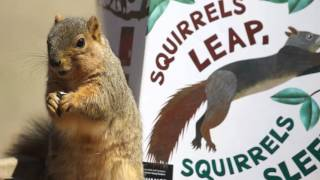 Squirrels Leap, Squirrels Sleep Trailer by April Pulley Sayre