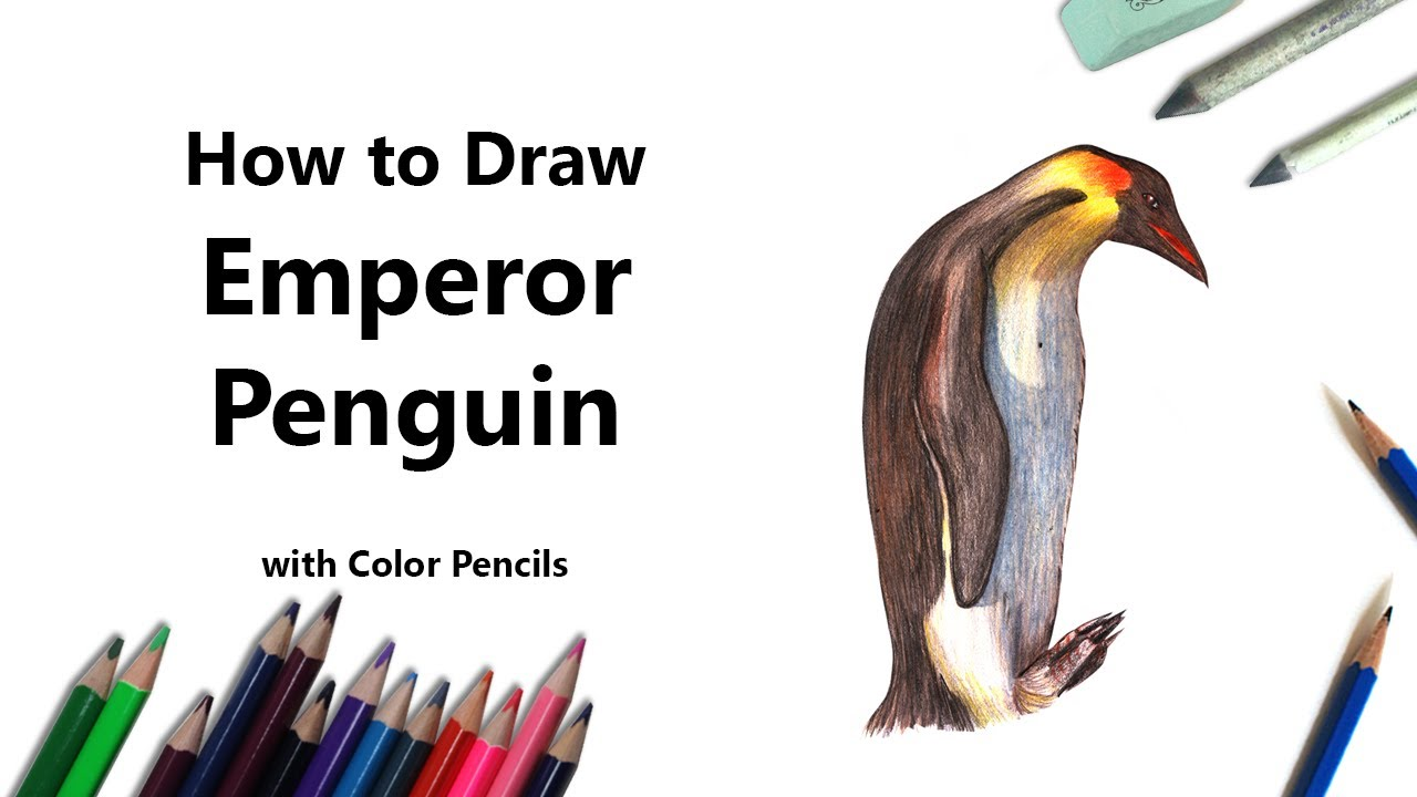 how to draw a emperor penguin with color pencils time lapse
