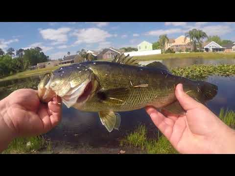 Pond Hopping in Kissimmee Florida