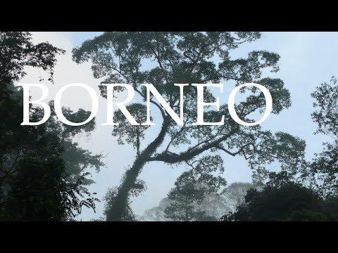 Danum Valley - Million Year old Rainforest - Borneo