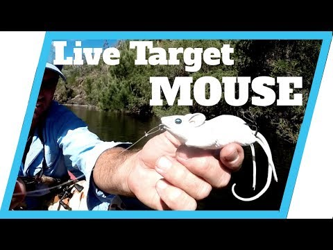 Live Target Field Mouse Review and Fishing Tips