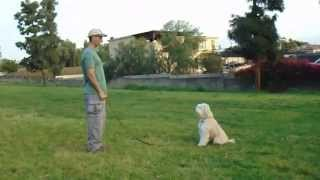 Sirius K9 Academy Intermediate Obedience Test Exercise - Hand Signals In Front