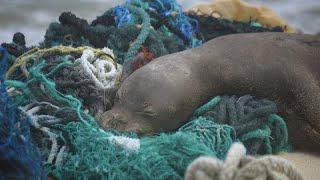 50 Tonna Szemetet Halásztak Ki A Tengerből Hawaii Partjainál