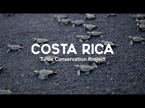 Costa Rica | Turtle Conservation Project