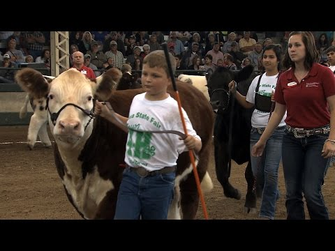 4H Market Steer Show | Iowa State Fair 2015