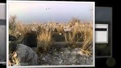 Pheasant hunting in pakistan.mp4