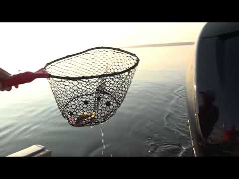 Fantastic Perch Fishing Out Of Curtis, Michigan