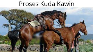 PROSES KUDA KAWIN ,NO SENSOR