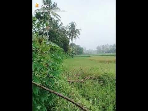 pemandangan hijau youtube