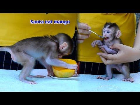 Bravo Baby Santa learning to eat mango today - Orphan Santa start to eat food now