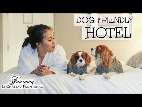 DOG FRIENDLY HOTEL   Fairmont Château Frontenac Québec City   Travelling With Dogs