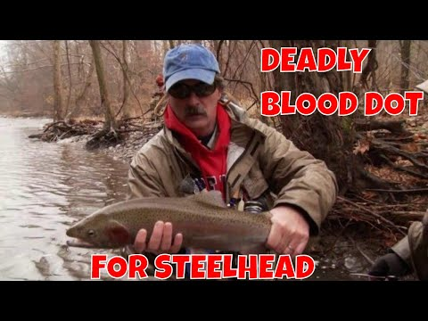 Steelhead On The DEADLY Blood Dot Fly