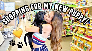 getting a puppy for christmas