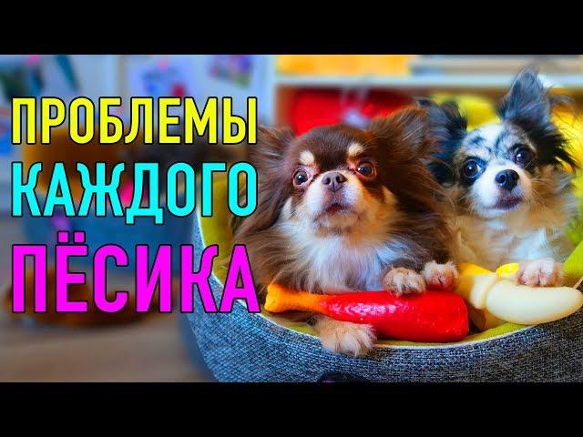 ПРОБЛЕМЫ КАЖДОГО ПЁСИКА | ПАРОДИЯ Magic Pets