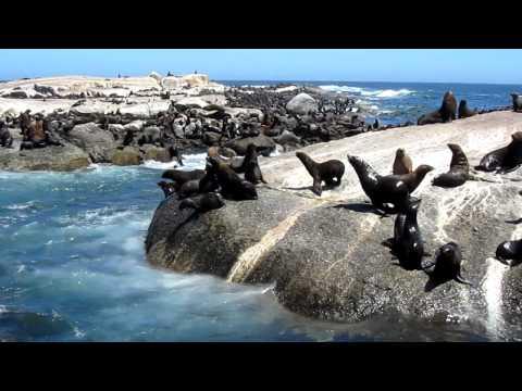 Seal Island Cape Fur Seals