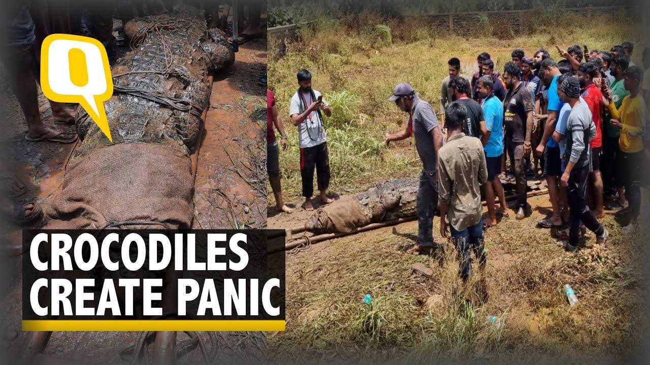 Maharashtra Floods   Crocodiles Terrorise Residents of Konkan Region   The Quint