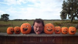 Stupid Orange In Nightmares Of Trains