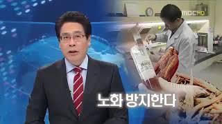 MBC 홍삼 항산화 효과 입증