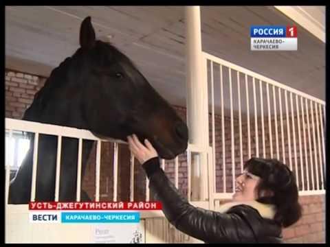 Лошади карачаевской породы .