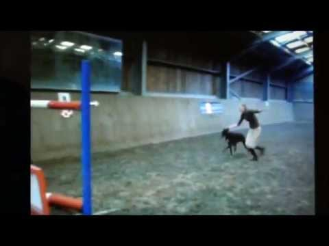 ROLO THE FAMOUS 6FT JUMPING DOG!! MUST SEE!! IN HD