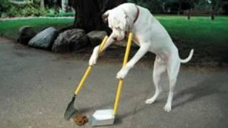 Potty Train Dog