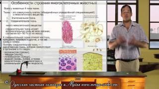 Особенности строения многоклеточных животных