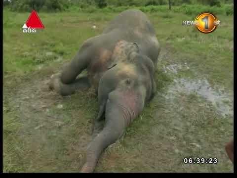 News 1st: Breakfast News Sinhala | (19-04-2018)